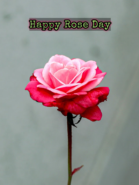 Rose day Bangla Sms