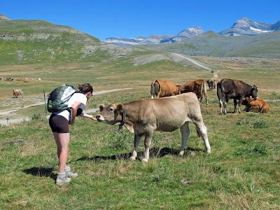 Risultati immagini per Bioregionalismo  - Agricoltura e pastorizia ecologica