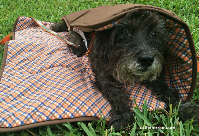Territory Brand travel blanket is perfect size for small dogs