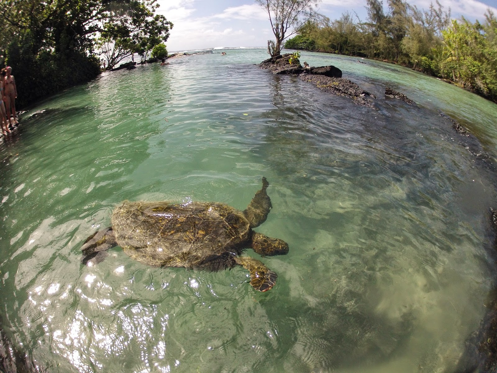 Family Travel Blog How To Find Sea Turtles On The Big
