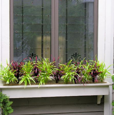 Great Window Box Decorating Ideas For Your Home