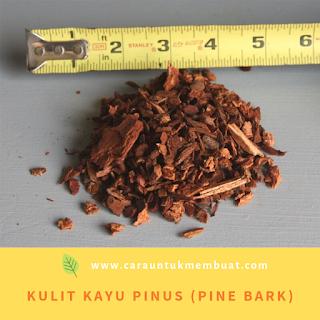 Kulit Kayu Pinus