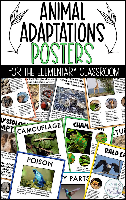 Animal Adaptations posters and worksheet set! Perfect for elementary students to accompany their study of animals.