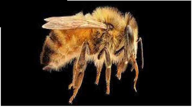 Bees Have Been Trained to Smell COVID-19 And Identify a Case Within Seconds