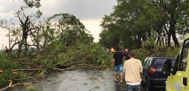 Vendaval derruba árvores e interdita rodovia entre Luiziana e Campo Mourão