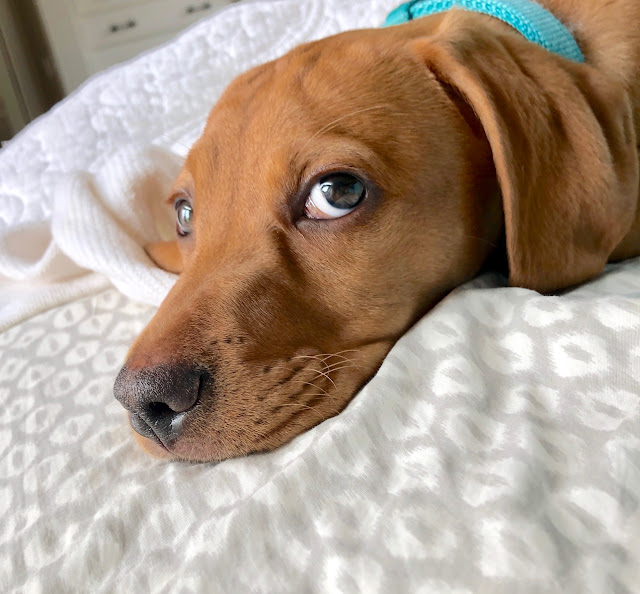 New Puppy Product Recommendations, Bliss-Ranch.com