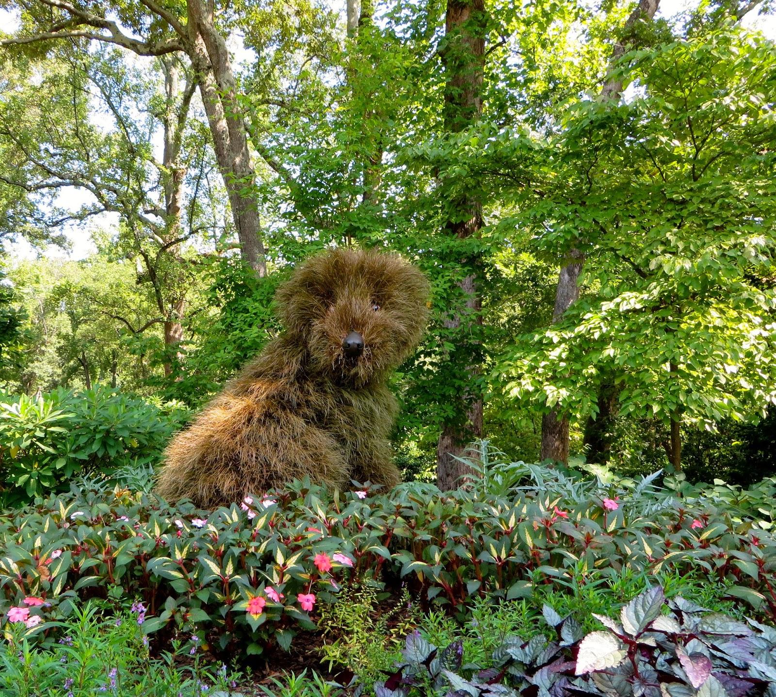 Atlanta Botanical Garden Skyline Gardens: A Curious Gardener: Atlanta Botanical Garden