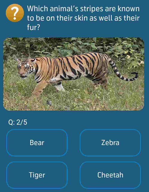 Which animal's stripes are known to be on their skin as well as their fur?