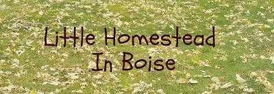 Little Homestead In Boise