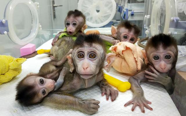 Serba dari China: Indonesia Rutin Impor Monyet hingga Buaya