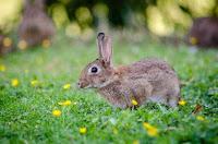 ternak kelinci, usaha ternak kelinci, bisnis ternak kelinci, modal ternak kelinci, ternak kelinci, kelinci, pemasaran ternak kelinci, rincian modal ternak kelinci