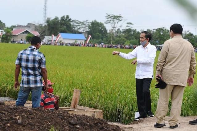 Ketika Ambisi Food Estate Pemerintah Rugikan Petani di Kalteng