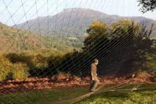 Caza de palomas con redes. Fiesta de la Paloma. En Sara