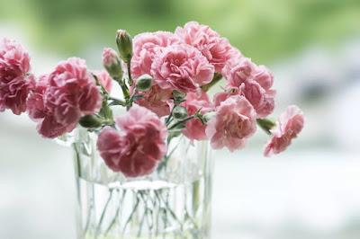 Loài hoa đẹp nhất cho cung hoàng đạo của bạn