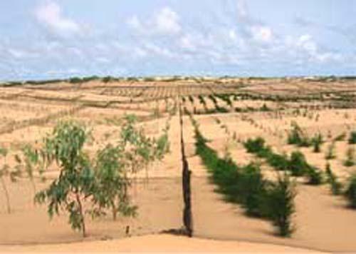 La grande muraille verte, le grand défi écologique : Projet, écologique, grande, muraille, verte, désertification, pauvreté, dégradation, changement, climatique, pépinières, alimentation, jardins, polyvalents, sahélo, saharienne, LEUKSENEGAL, Dakar, Sénégal, Afrique