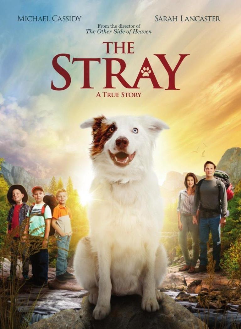 The Stray [2017] [DVDR] [NTSC] [Latino]