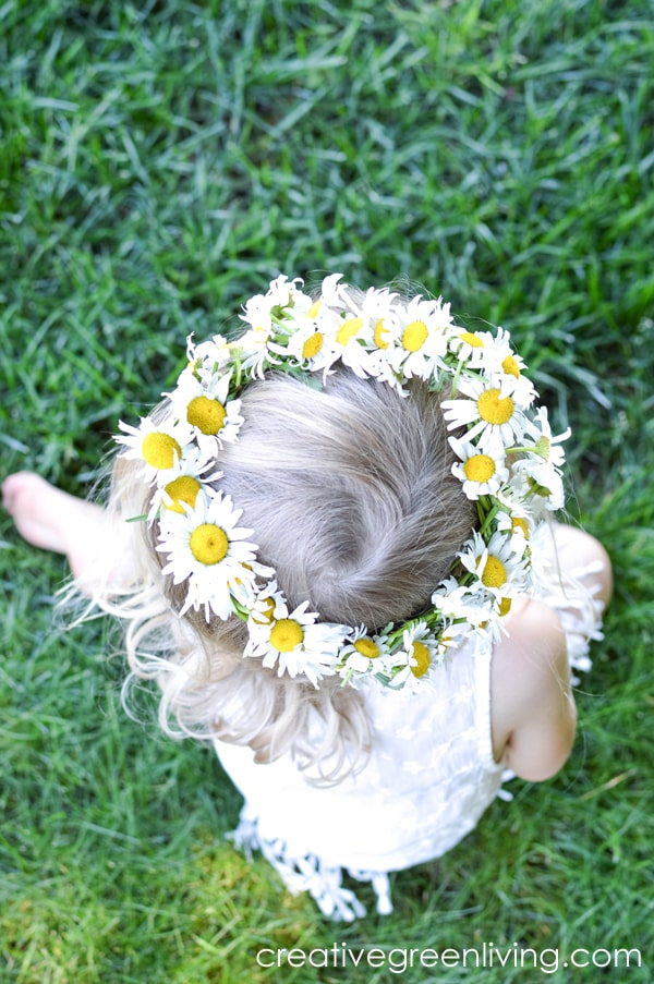 How to make a daisy chain flower crown or bracelet with real flowers. This easy DIY tutorial shows you how to make a floral headband or crown from daisies, dandelions or other wildflowers. #creativegreenliving #daisychain #flowercrown #kidscrafts