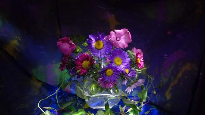 Purple & Pink Flower Wallpaper | Free Download
