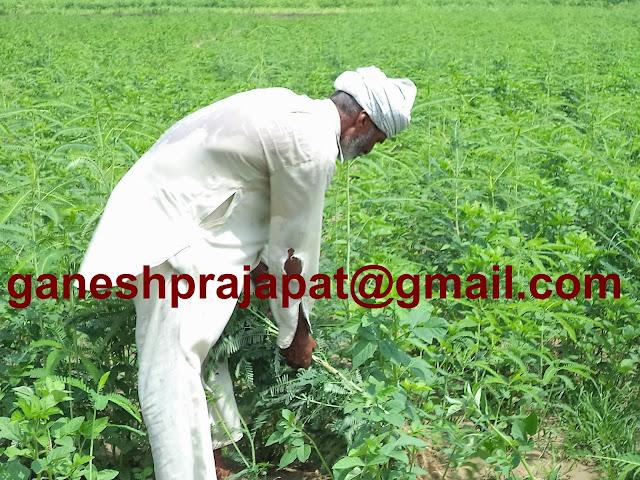"ग्वार व ग्वार गम के भावों में तेज़ी कच्चे तेल के बढ़ते उत्पादन के कारण बनी रहेगी , Guar, guar gum, Guar gum price, Guar gum export,  guar gum news, NCDEX guar gum price, Guar gum report, guar seed production, guar gum consultant, guar seed export, guar gum export from india 2017-2018 , guar, guar gum, guar gum news, Guar gum export-2017-2018, Guar gum export-from India during 2017-2018, Guar gum export data -2017-2018, Guar gum rate , NCDEX guar gum price,  guar gum export-2017, guar gum export-2018, guar gum demand-2017, guar gum demand-2018, guar gum production, guar gum cultivation, guar gum cultivation consultancy, Guar, guar gum, guar price, guar gum price, guar demand, guar gum demand guar seed production, guar seed stock, guar seed consumption, guar gum cultivation, guar gum cultivation in india, Guar gum farming, guar gum export from india, Fundamentally Guar seed and guar gum are very strong , Guar, guar gum, guar price, guar gum price, guar demand, guar gum demand, guar seed production, guar seed stock, guar seed consumption, guar gum cultivation, guar gum cultivation in india, Guar gum farming, guar gum export from india , guar seed export, guar gum export, guar gum farming, guar gum cultivation consultancy, today guar price, today guar gum price, ग्वार, ग्वार गम, ग्वार मांग, ग्वार गम निर्यात 2018-2019, ग्वार गम निर्यात -2019, ग्वार उत्पादन, ग्वार कीमत, ग्वार गम मांग, guar seed, Guar Gum   Guarkernmehl, Guarkernmehl (Guar Samen) Anbau-Beratung in Deutschland, Guarkernmehl Samen (Cyamopsis tetragonoloba) Anbau / Landwirtschaft / Agrarwirtschaft Beratung in Deutschland, guat bhav in future, Gum seed production, Guma guar, Guma guar (nasiona Guar) uprawy Consultancy Polska,Türkiye ye Guar sakız (Guar tohum) tarım danışmanlığı, What does "" Crude Going Down "" means?, which rose for a third consecutive week ??, Why Guar seed and Guar Gum is going up ? Is it real of speculative ? Guar seed, Will Guar seed and Guar Gum prices, Will Guar seed and Guar gum prices i"