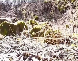 most dangerous places in the world, snake island in brazil