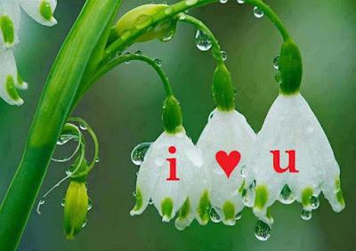 i-loveyou-written-in-flowers