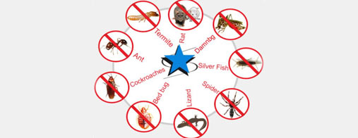 Ways To Improve Your Try Do-It-Yourself Options Before a Pest Control Service