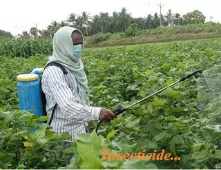 Disaster caused by pesticides