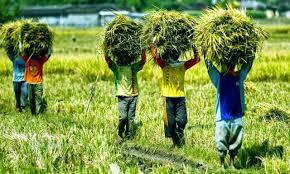 Bentuk Kegiatan Ekonomi di Indonesia