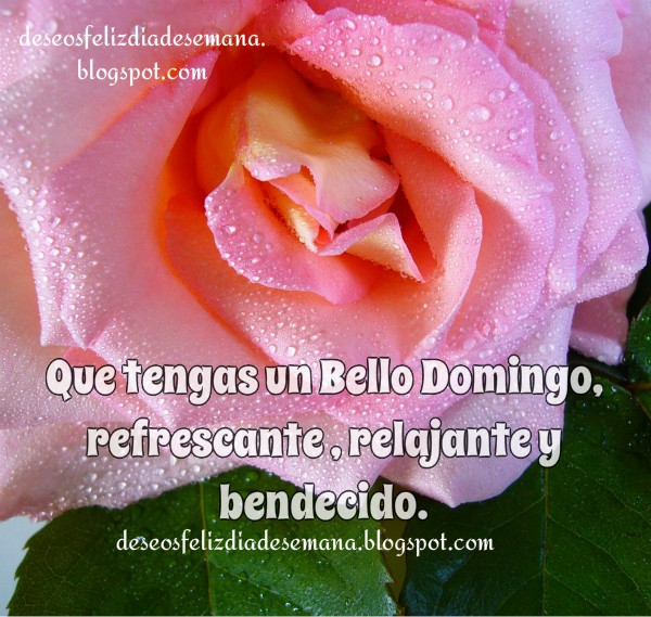 imagen de feliz domingo rosas bendiciones para facebook