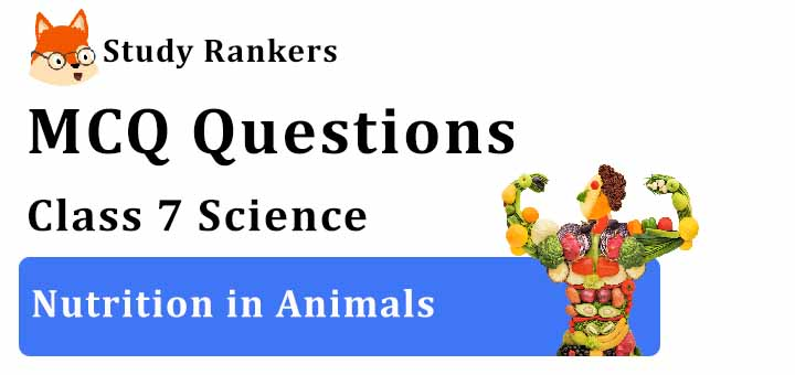 MCQ Questions for Class 7 Science: Ch 2 Nutrition in Animals