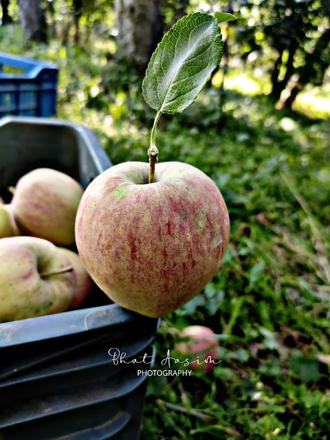 Surely the apple is the noblest of fruits @bhataasim_photography