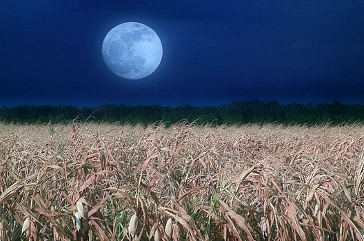 friday-13-full-moon-tonights-harvest