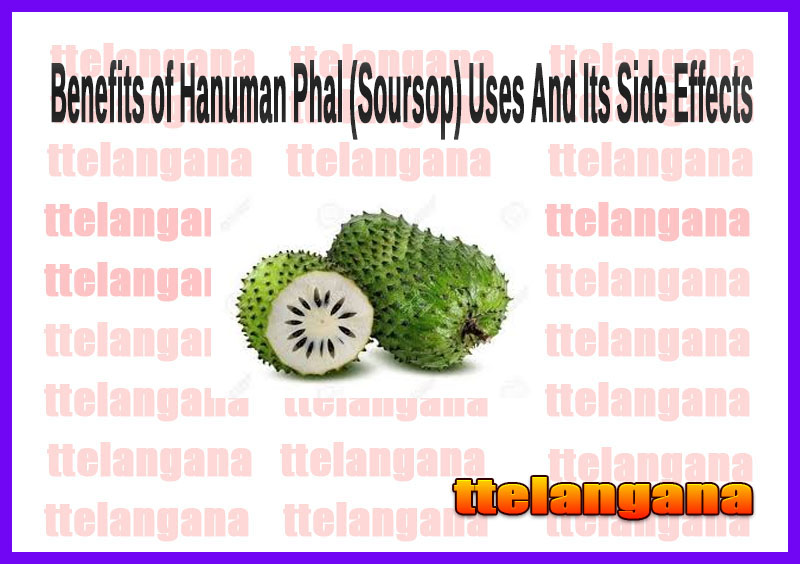 Benefits of Hanuman Phal (Soursop) Uses And Its Side Effects