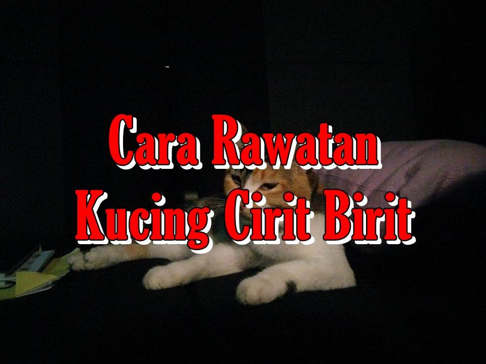 Cara Rawatan Kucing Cirit Birit Nurfuzie Com