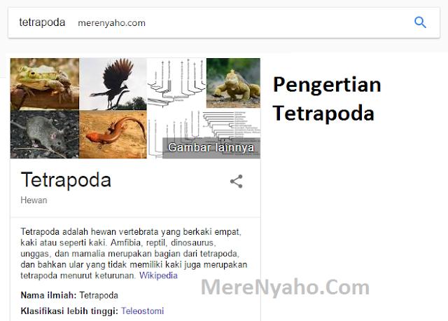 tetrapoda,Pengertian Tetrapoda, kelompok utama tetrapoda, karakteristik tetrapoda