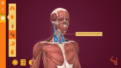"""""""Anatomy: El Cuerpo Humano"""": una app para aprender anatomía"""