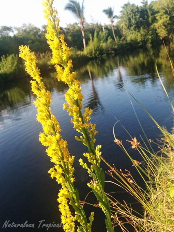 Flor creciendo a las orillas del Río Mayabeque