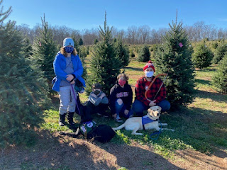 Four people in coats and masks and two Labrador retrievers in service dog harnesses pose in front of pine trees.