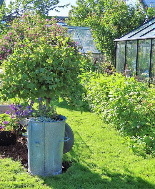 Lev landlig og fruktbart i en hage i Vaterland ved Gamlebyen - gjenbruk er det mye av her IMG_1890 (2)-min