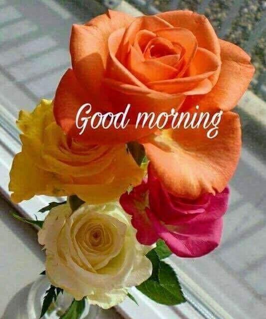 Good Morning flower Wishes Lovely Pics