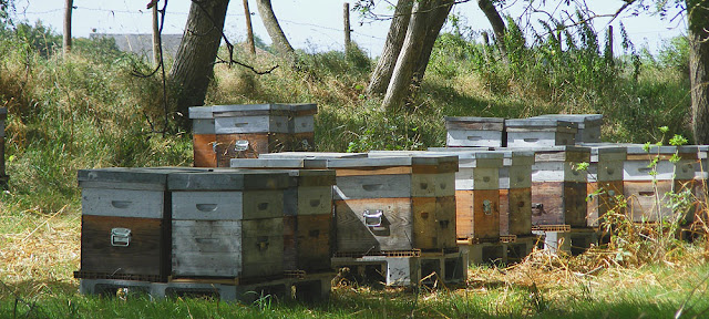 Beehives. Indre et Loire. France. Photo by Loire Valley Time Travel.