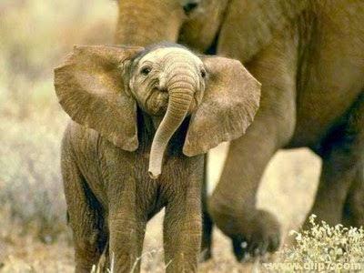 imagen de elefante bebe