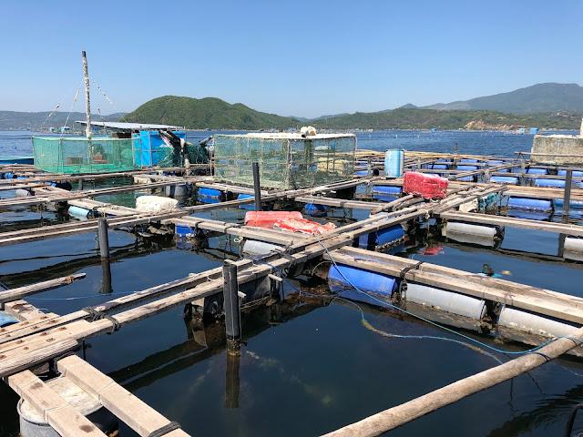 Hồ Nuôi tôm hùm tại thị xã Sông Cầu - Tỉnh Phú Yên.