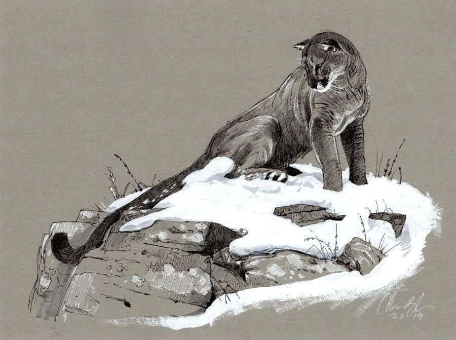 09-Cougar-Mountain-Lion-Aaron-Blaise-www-designstack-co