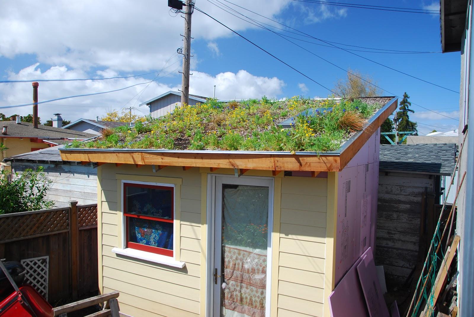 Tiny Backyard House Green Roof In Bloom Loft Built