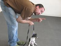 Puppy training en gehoorzaamheids cursus