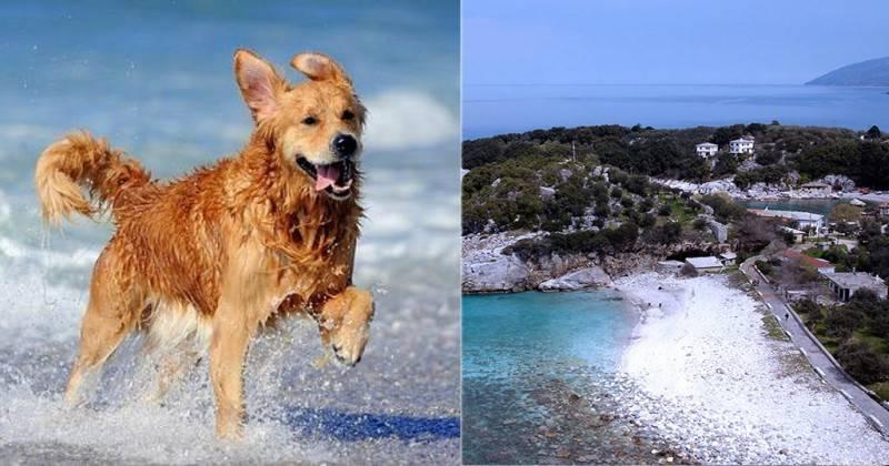 Πήλιο:«Παλικαράς» ξυλοκόπησε γυναίκα επειδή έβαλε τα σκυλιά της στη θάλασσα!!!