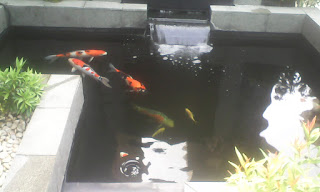 tukang kolam online