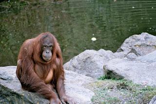 Haruskah hewan dipelihara di kebun binatang