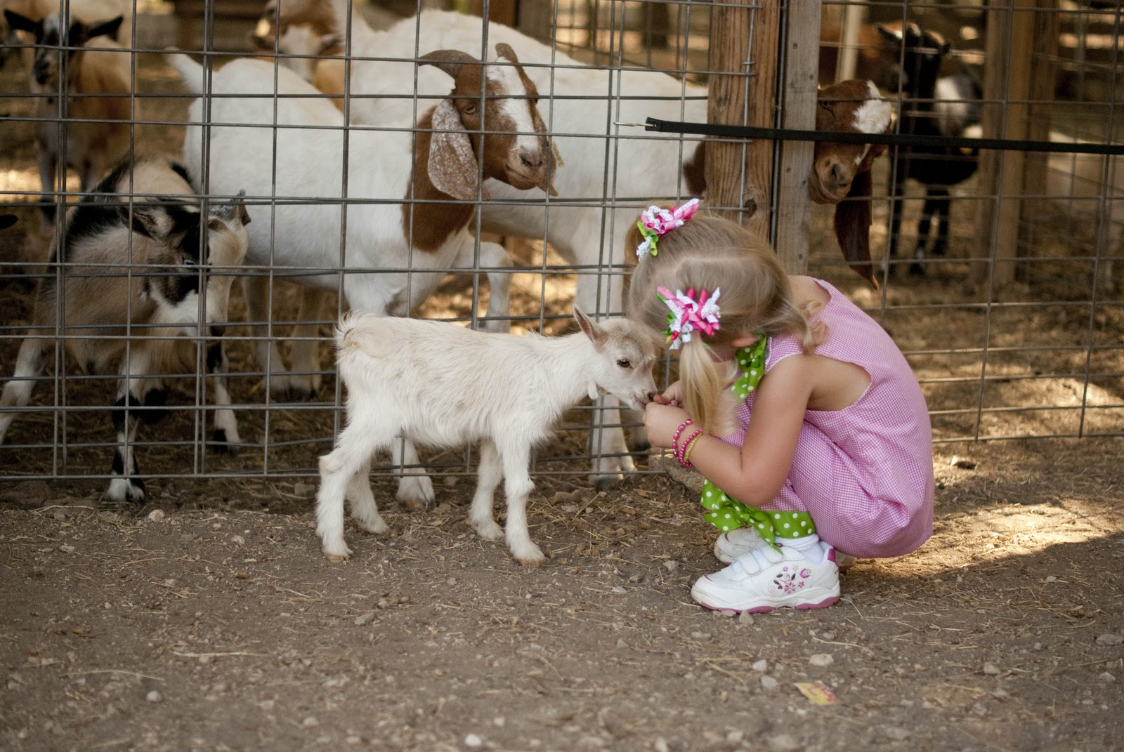 Glam O Mommy 3rd Birthday Farm Fiesta